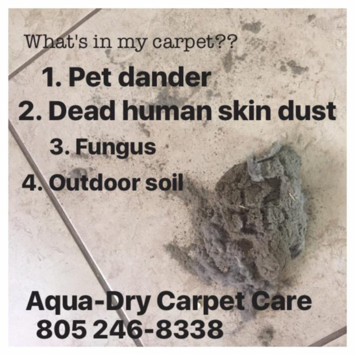 What's in my carpet?